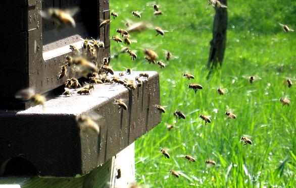 bin på väg in i kupan