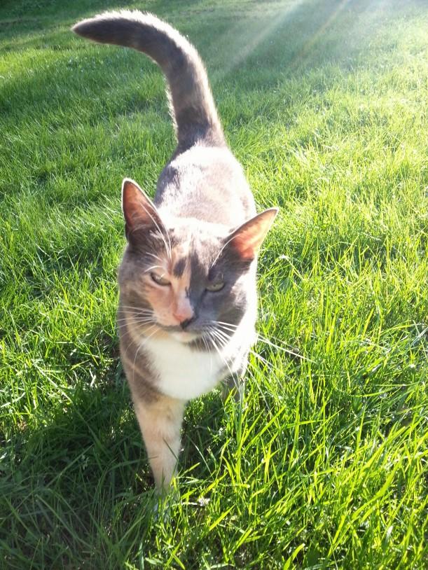Freya njuter i solen